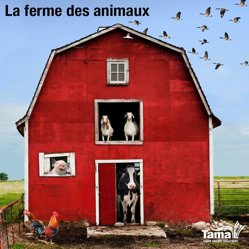 La ferme dex animaux
