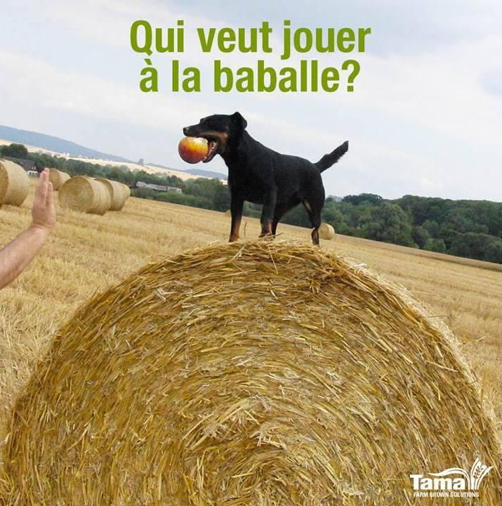 tama filet agricole