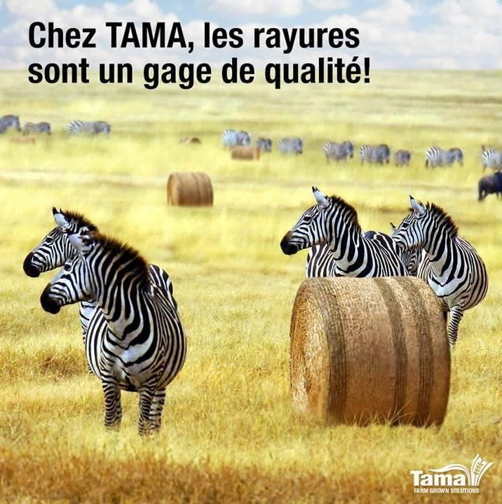 tamanet zebra system