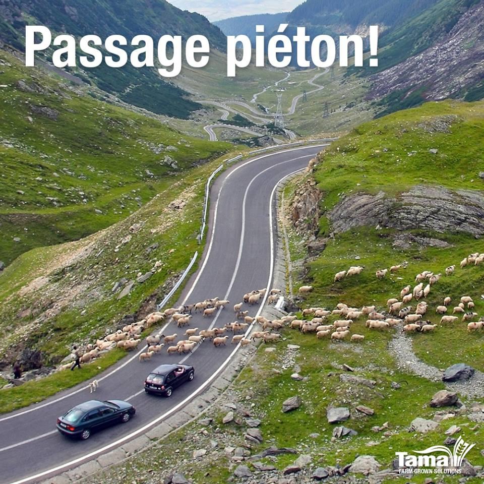 Passage piéton!