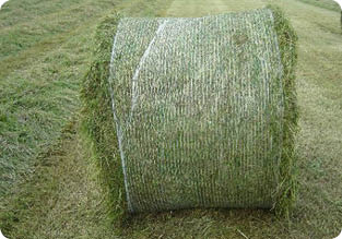 mouldy silage